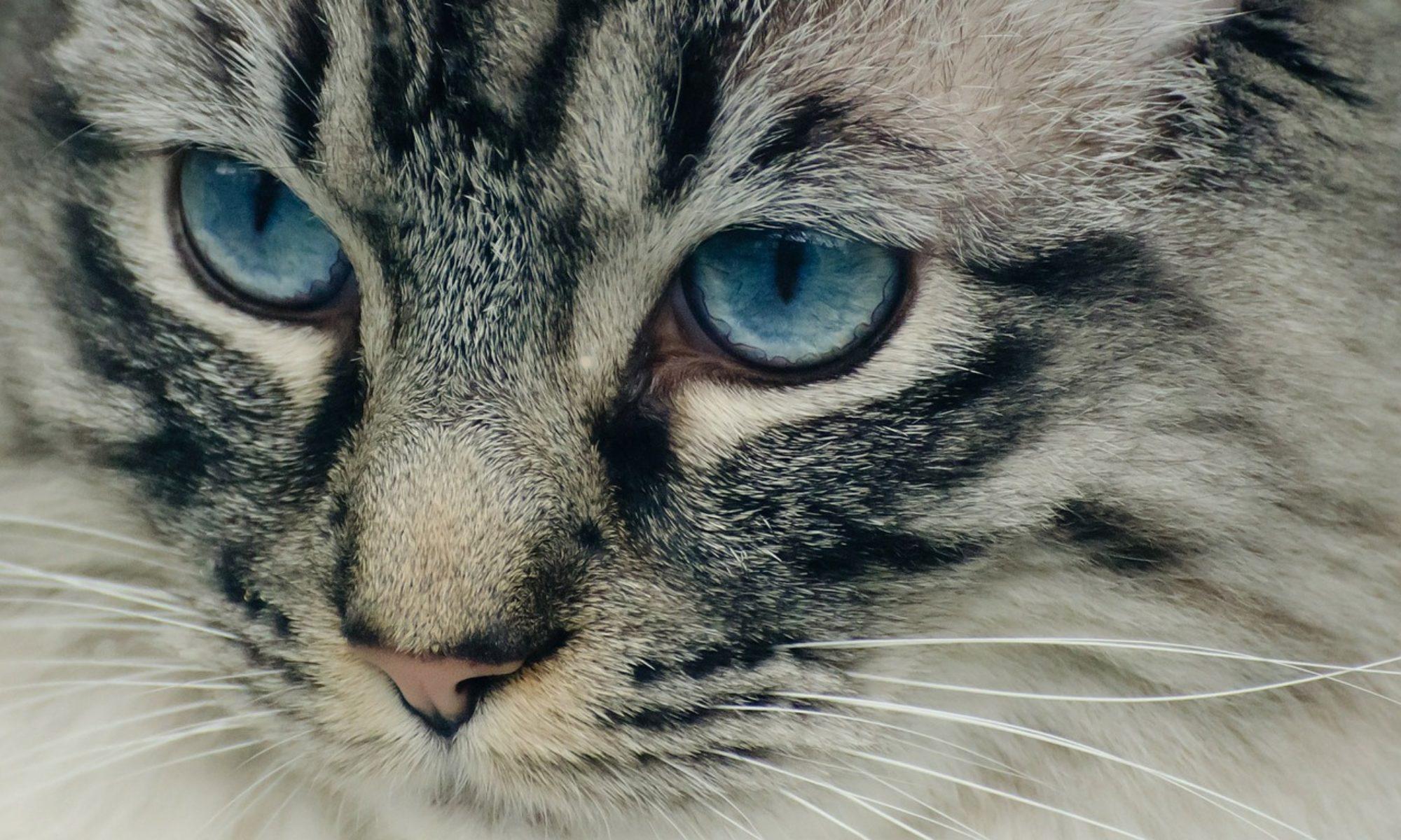 Baltic Feline